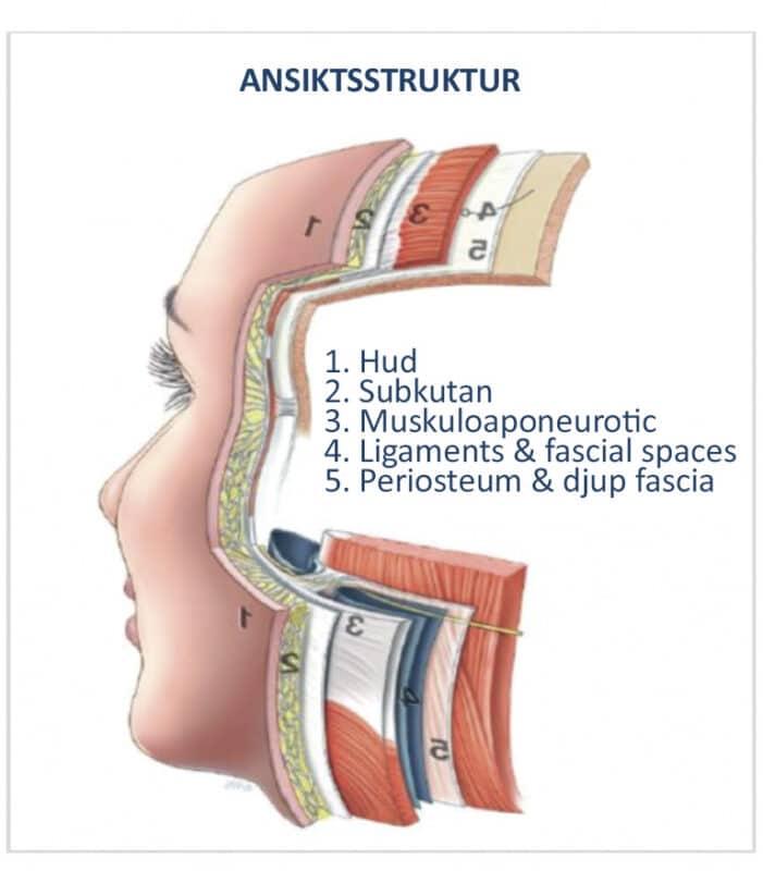 ansiktstruktur
